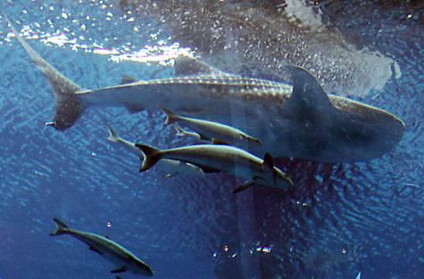 سامي في الحوض مع بعض الأصدقاء الذين لم يسأل عنهم أحد