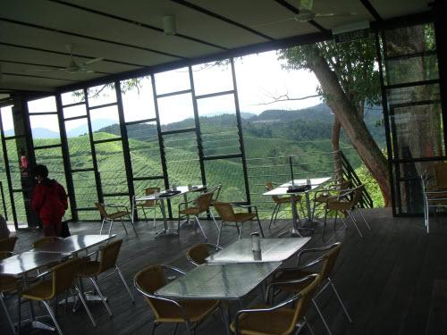 مزارع الشاي على مد البصر، تشاهدها وأنت تحتسي منتجات المصنع في المقهى الخاص