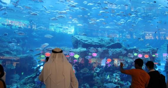 حوض أسماك دبي مول